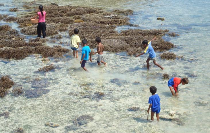 Les enfants cherchent leur goûter à marée basse.